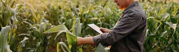 Protecting Your Crops and Your Money With Agriculture Insurance